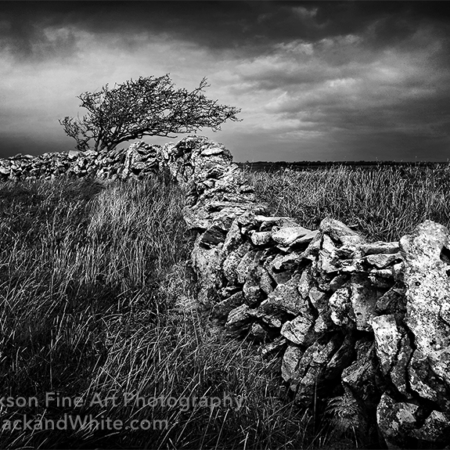 Irish Stone Fence black and white photo
