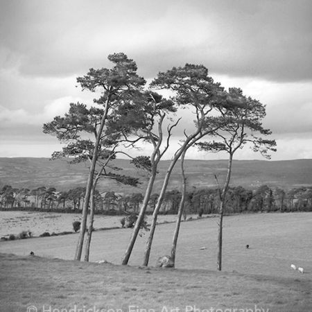 Clonmacnois Trees by Hendrickson Photo