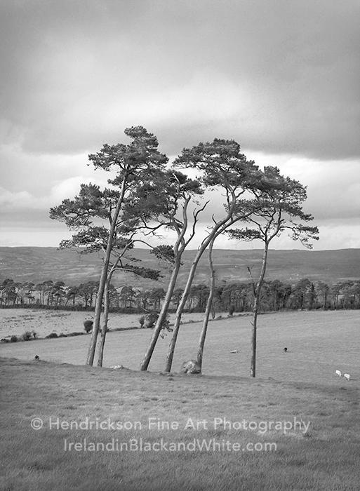 Clonmacnois Trees by Hendrickson Photo
